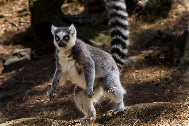 Madagascar Baobabs and Lemur Tour 4
