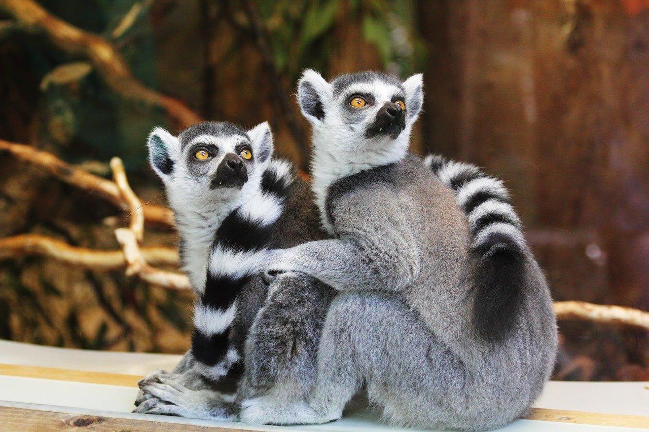 Madagascar Luxury Trip 7