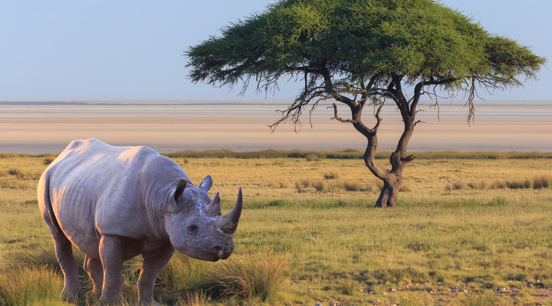 Top 10 Best Safari Destinations In The World