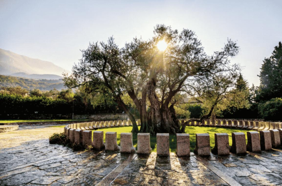 Bar-Old-Olive-Tree-montenegro