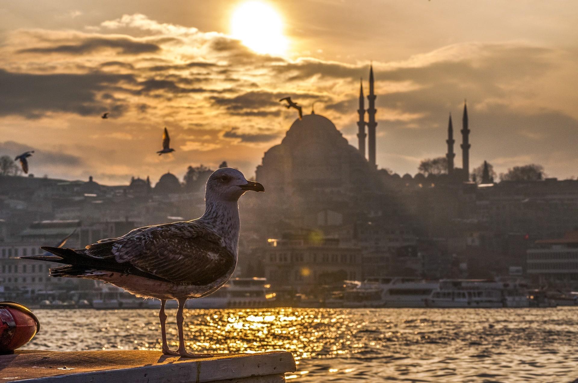 Grand Turkey Tour 4
