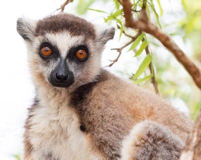 Madagascar Travel Guide 1
