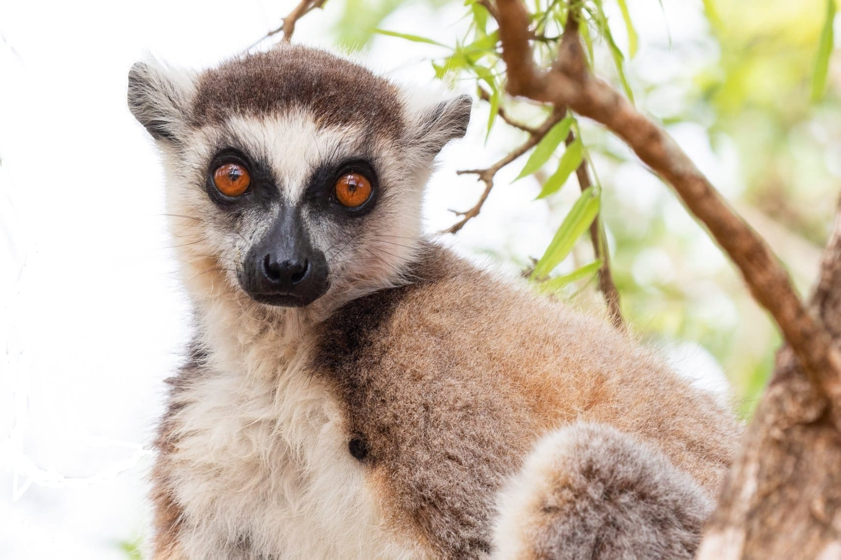 Discover the Emblematic Species of Madagascar 1