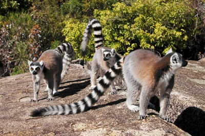 Discover the Emblematic Species of Madagascar 8