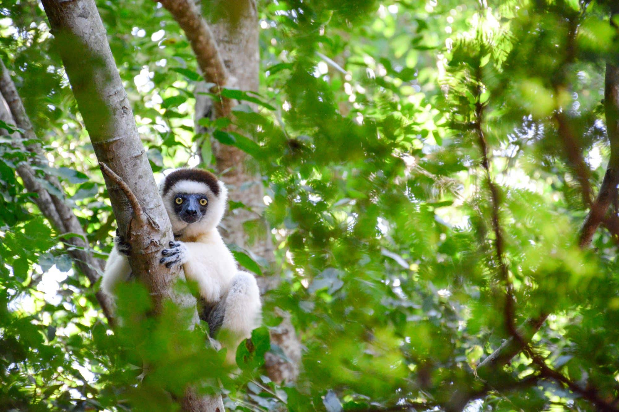 Discover the Emblematic Species of Madagascar 4