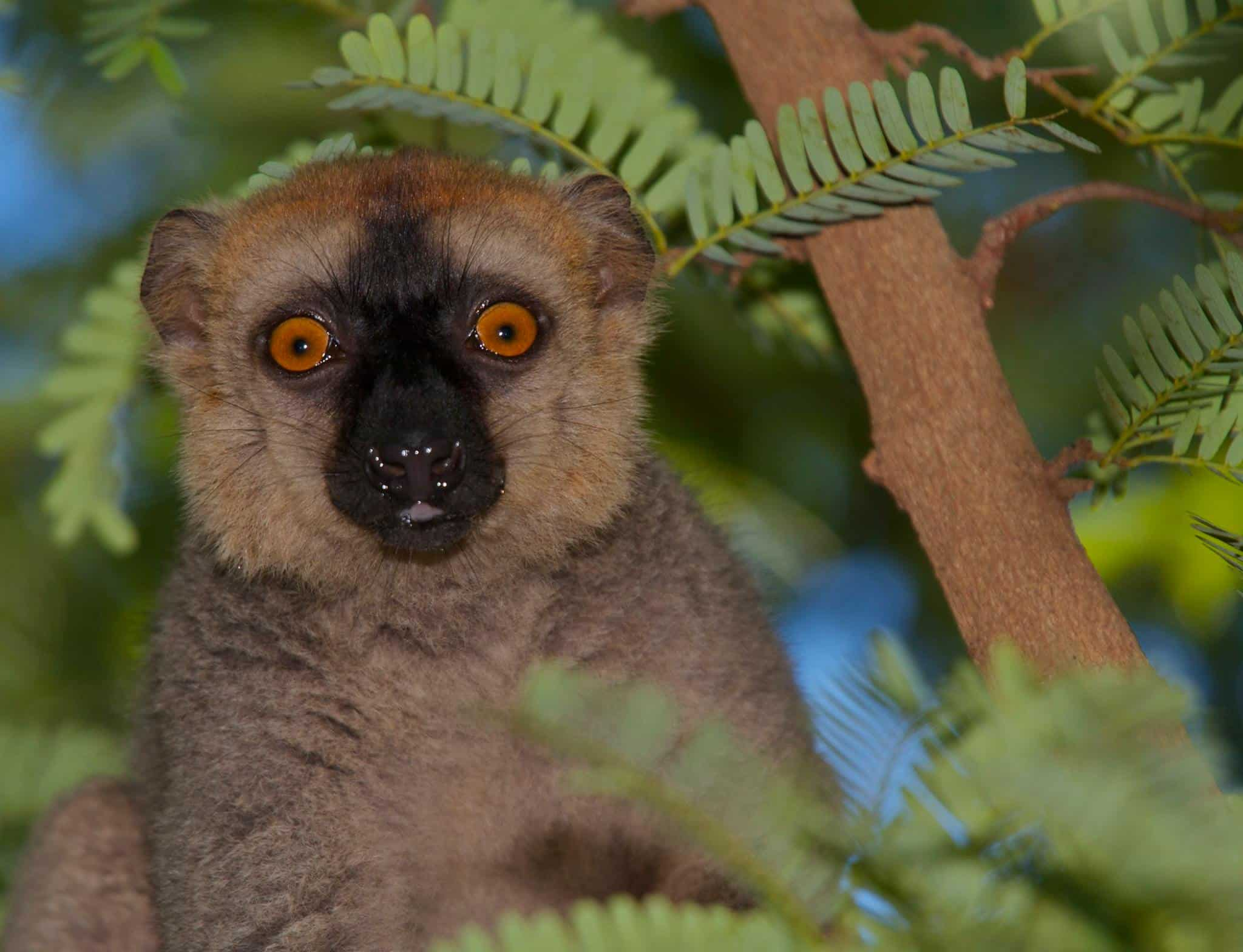 Discover the Emblematic Species of Madagascar 5
