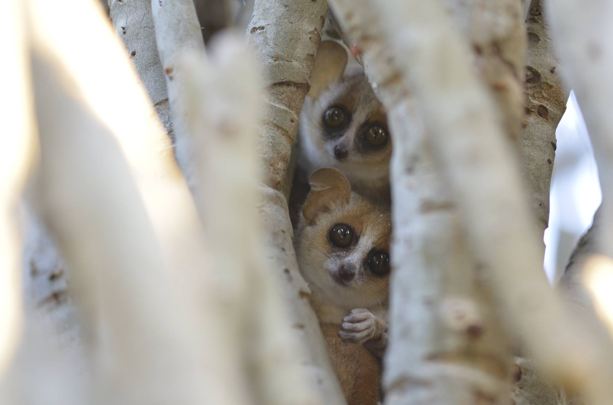 Discover the Emblematic Species of Madagascar 6