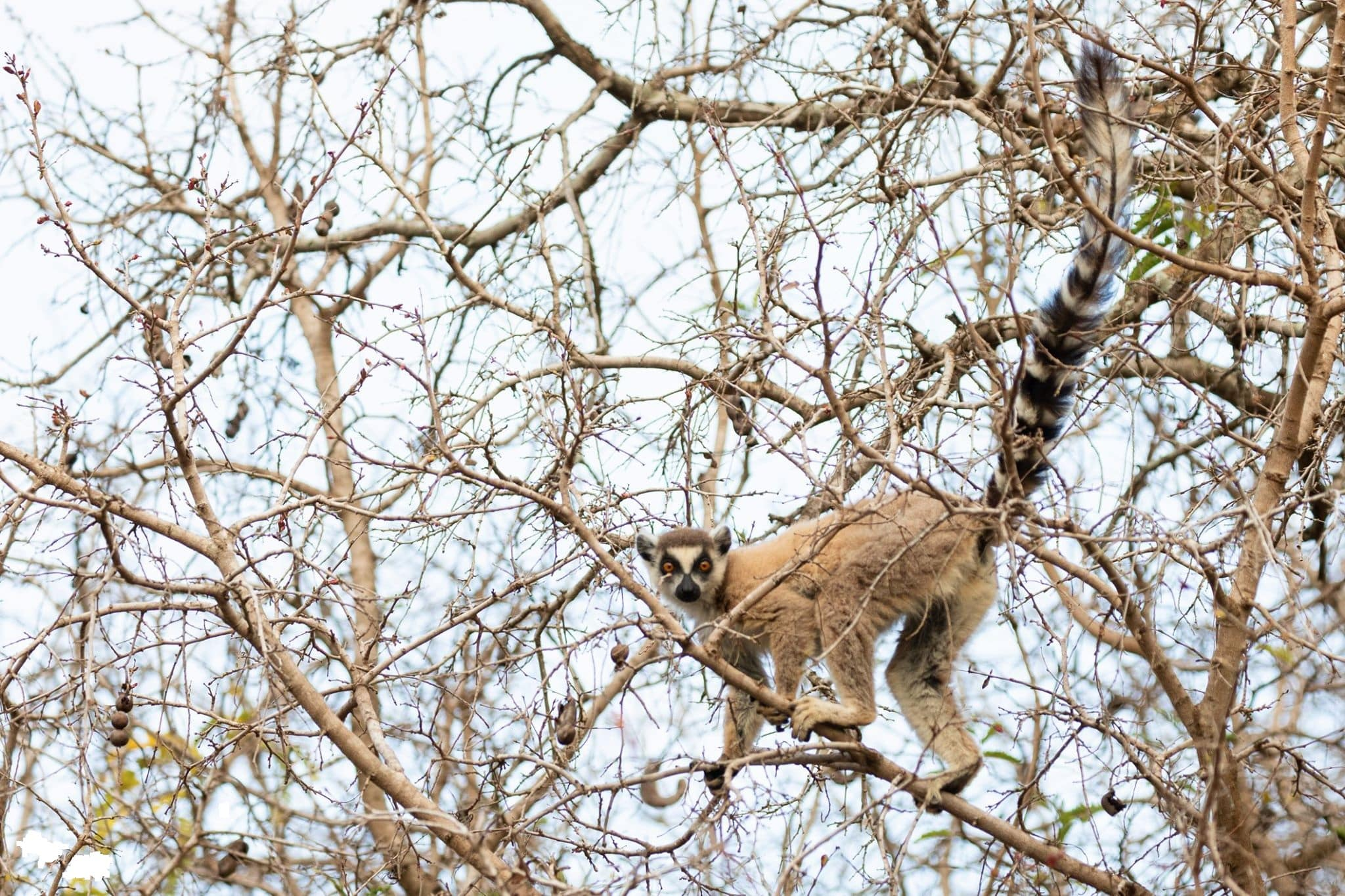 Discover the Emblematic Species of Madagascar 7