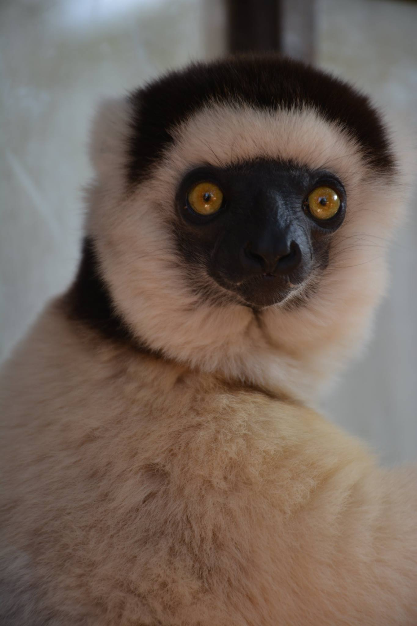 Discover the Emblematic Species of Madagascar 9