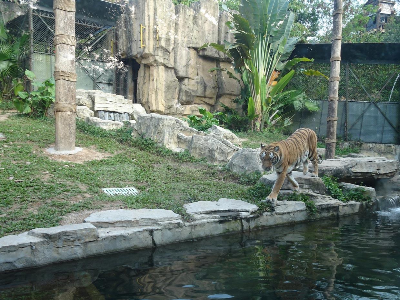Top 10 Best Safari Destinations In The World 1