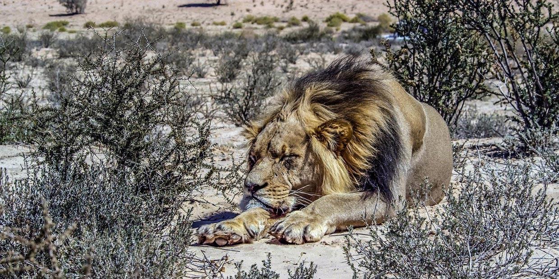 Kalahari, Botswana