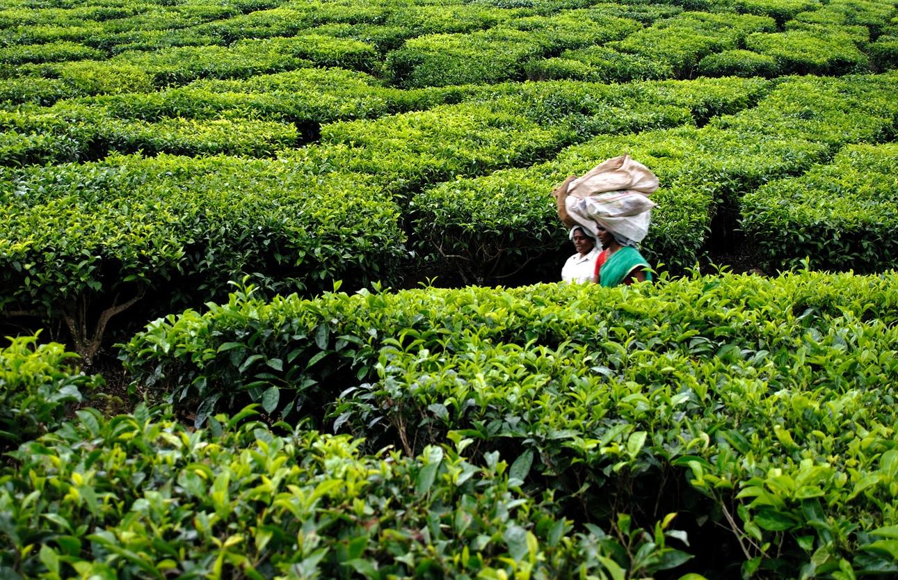 Kerala Nature & Pilgrimage Tour 4