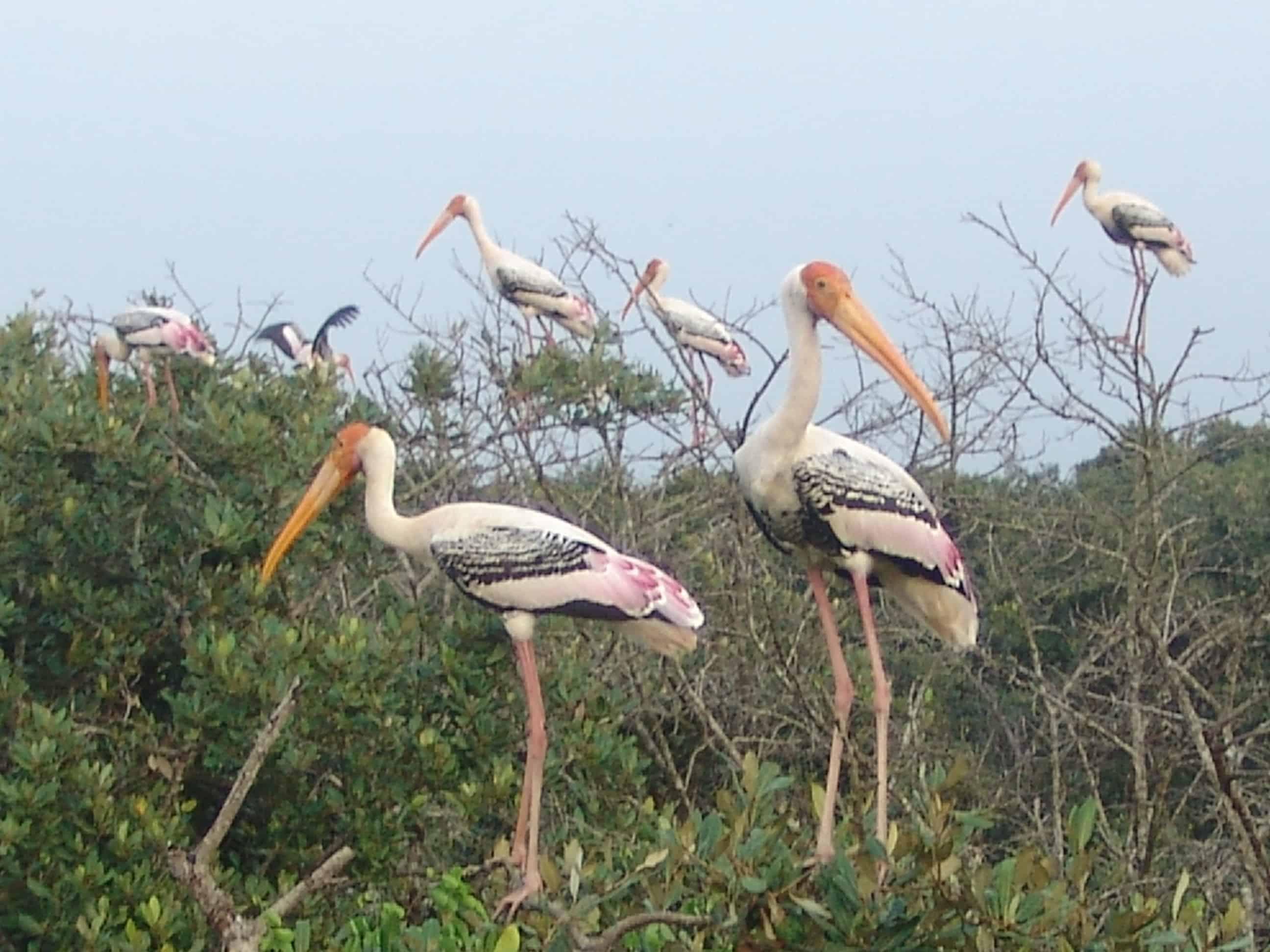 Kolkata Tour to Vizag East Coast Overland 8