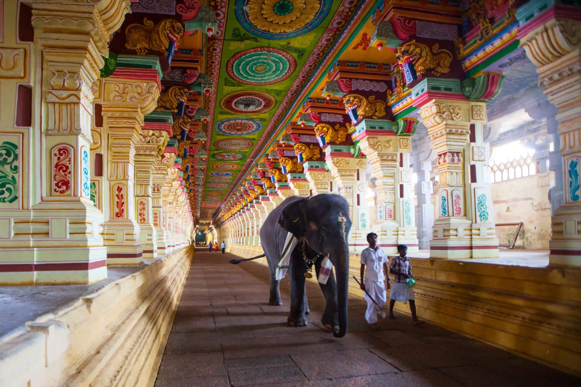 Kerala Nature & Pilgrimage Tour 3