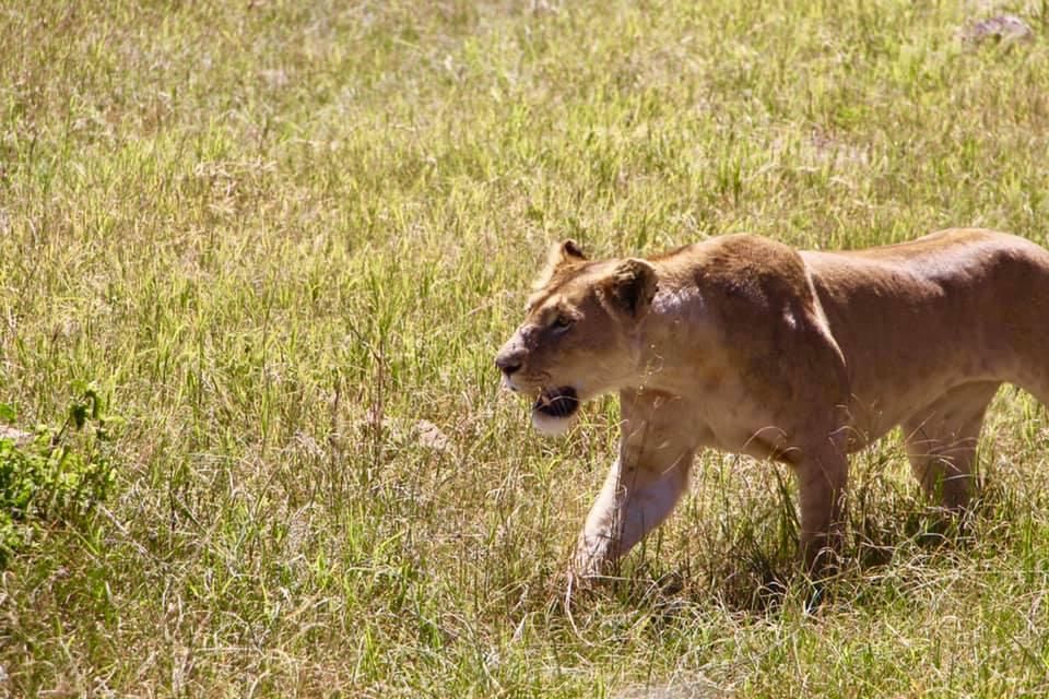 8 Days Tanzania Safari Tour 2