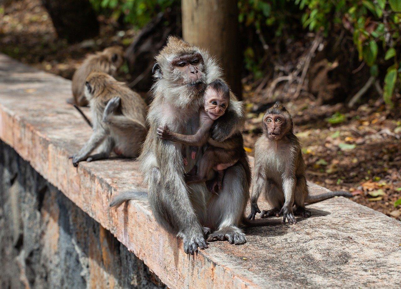 Soberania National Park Monkeys Discovery 5