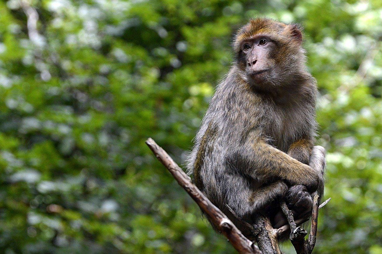 Soberania National Park Monkeys Discovery 7