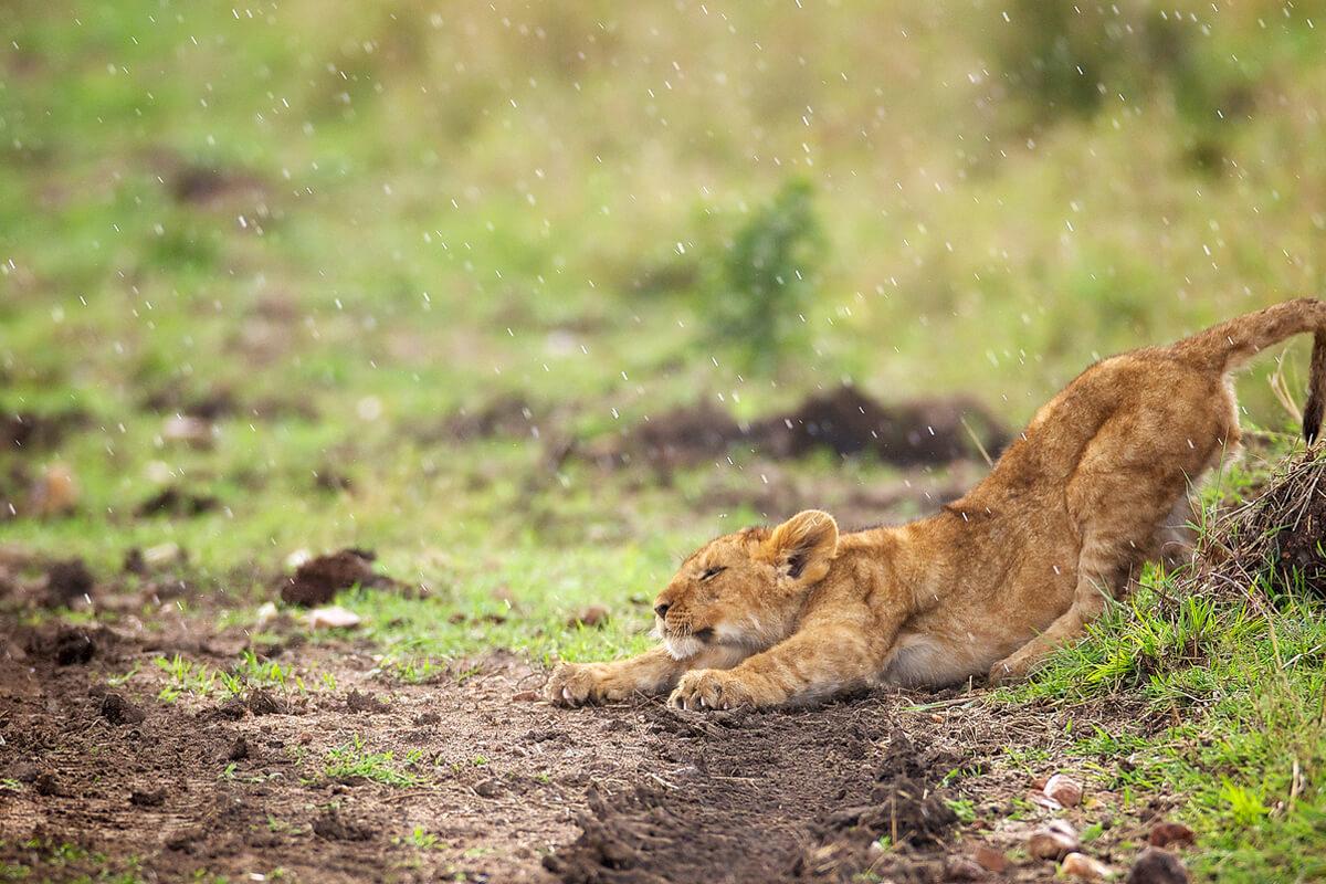 Short Safari to Tarangire, Lake Eyasi and Ngorongoro Crater 2