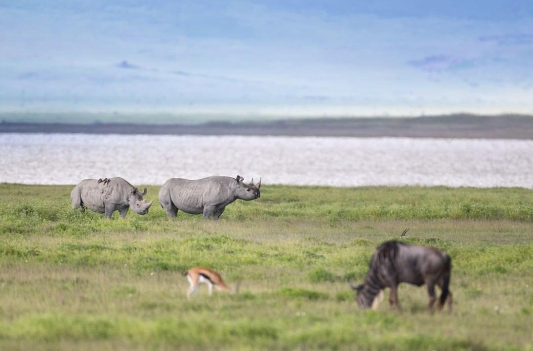 3 Days Arusha, Tarangire and Ngorongoro Crater 7