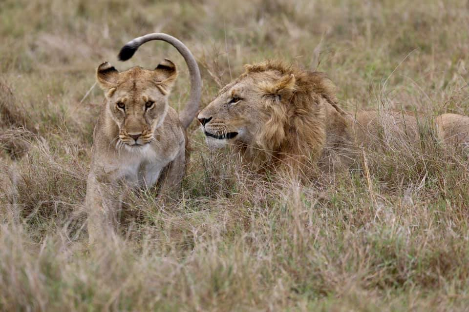 3 Days Safari to Tarangire, Lake Manyara and Ngorongoro Crater 2
