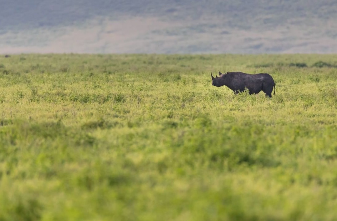 3 Days Safari to Tarangire, Lake Manyara and Ngorongoro Crater 5