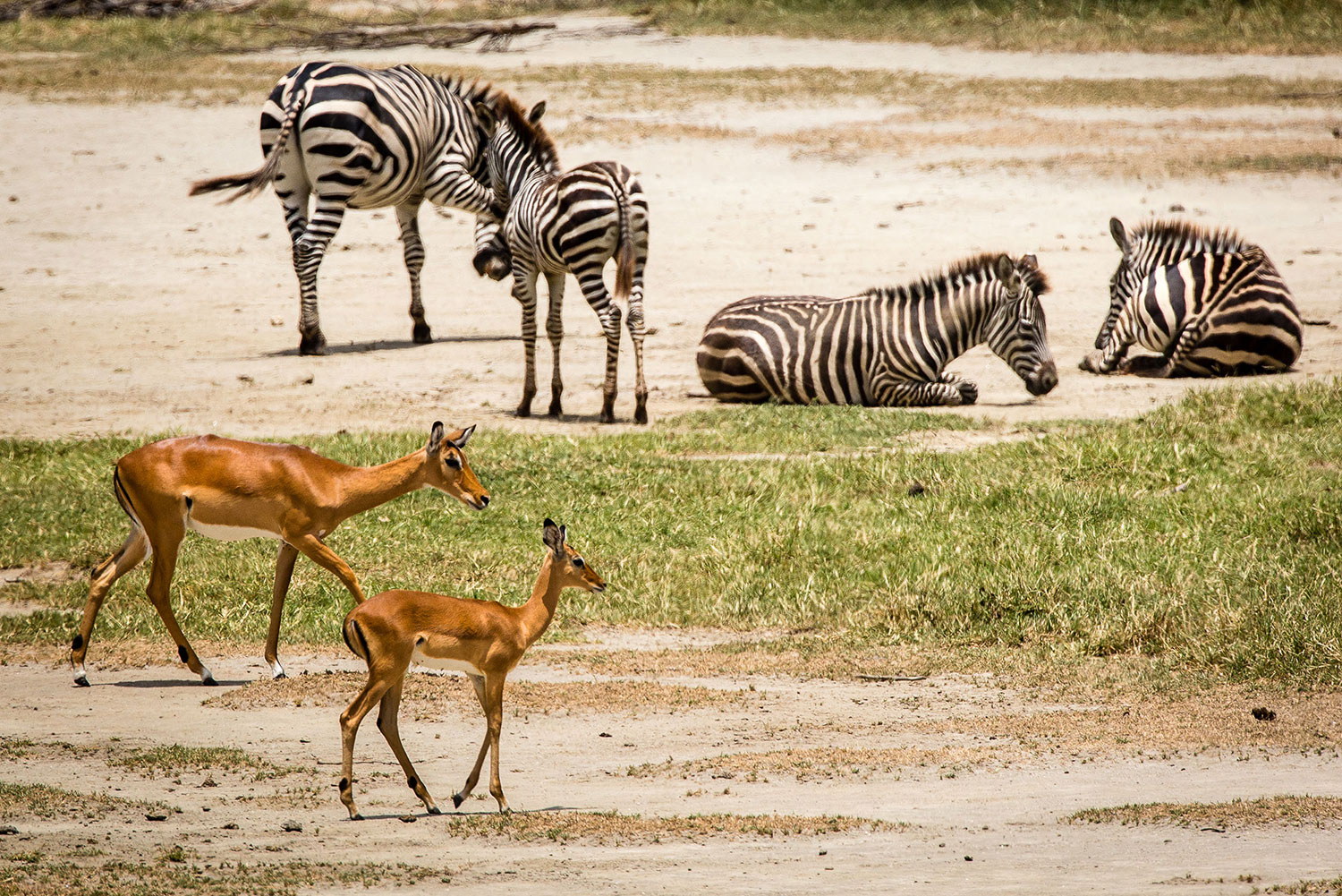 3 Days Safari to Tarangire, Lake Manyara and Ngorongoro Crater 8