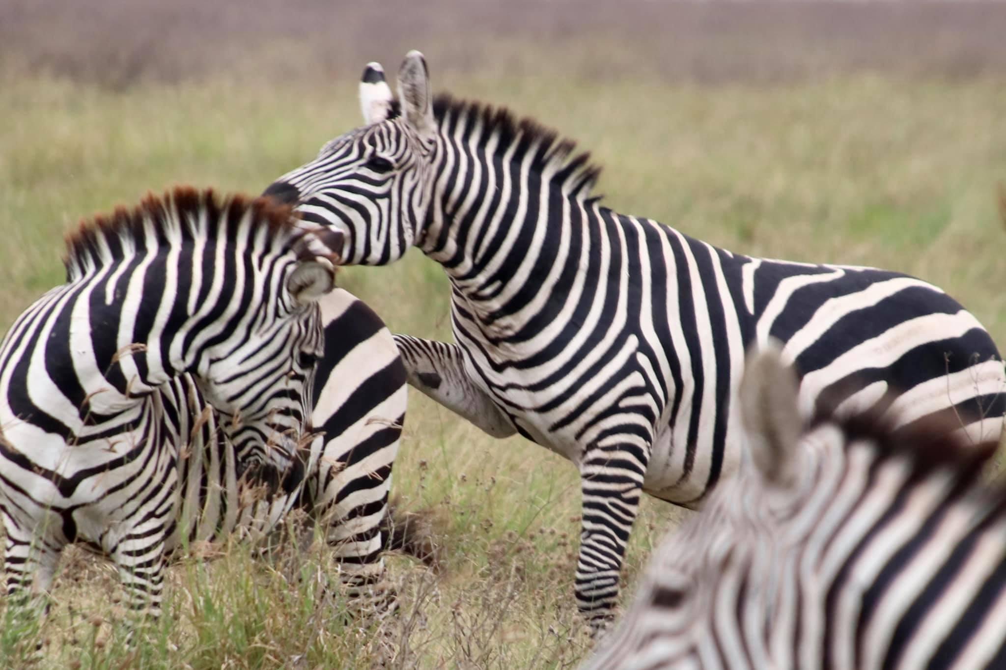 Short Safari to Tarangire, Lake Eyasi and Ngorongoro Crater 7