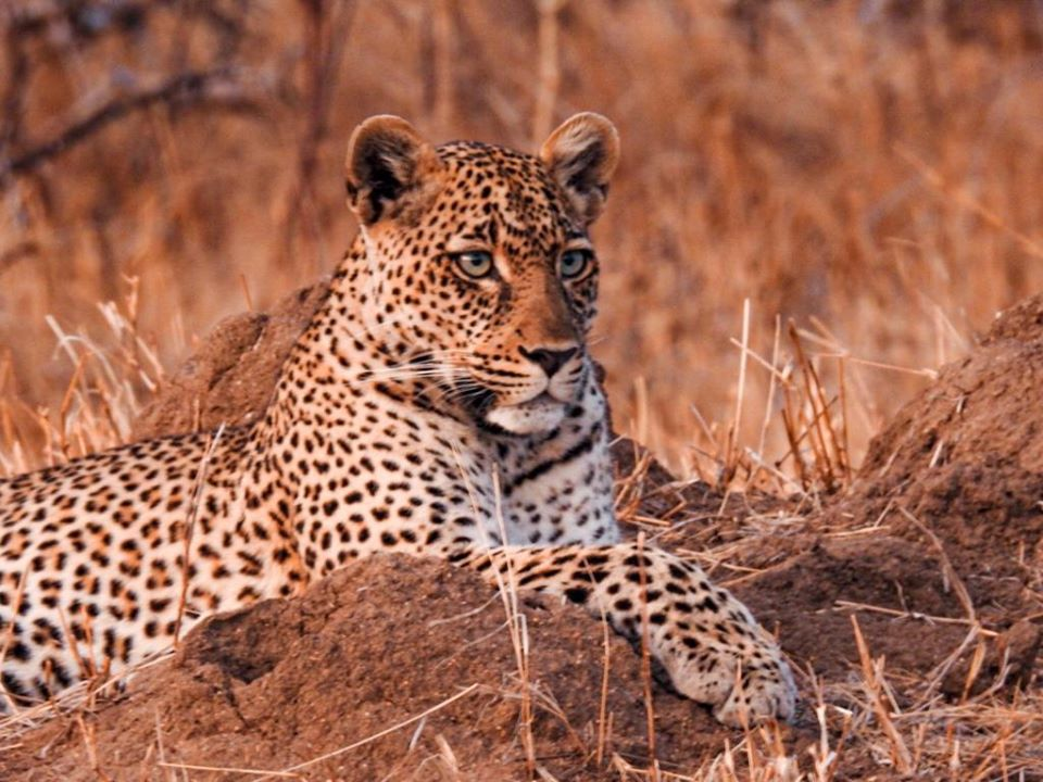 Camping Safari to Manyara,Serengeti and Ngorongoro 5