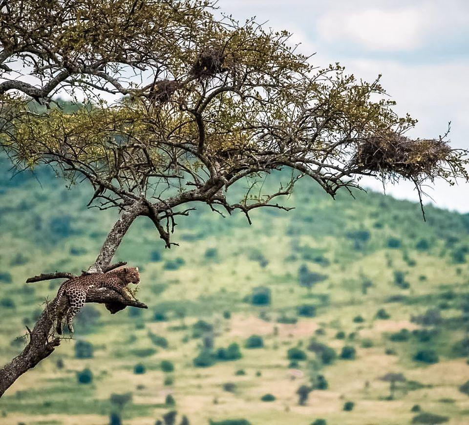 Kilimanjaro & Serengeti Adventure 8
