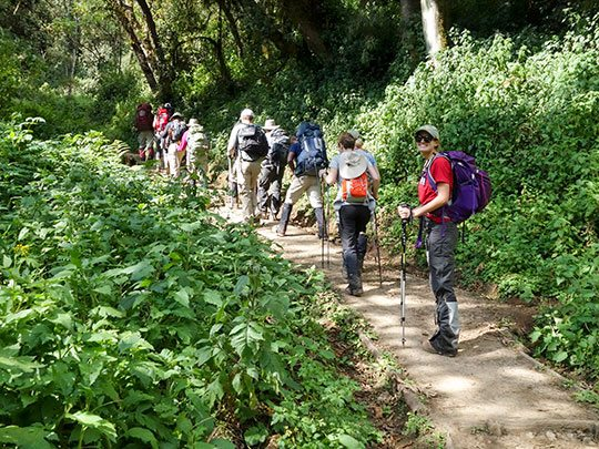 8 Day Kilimanjaro Climb - Machame Route 2