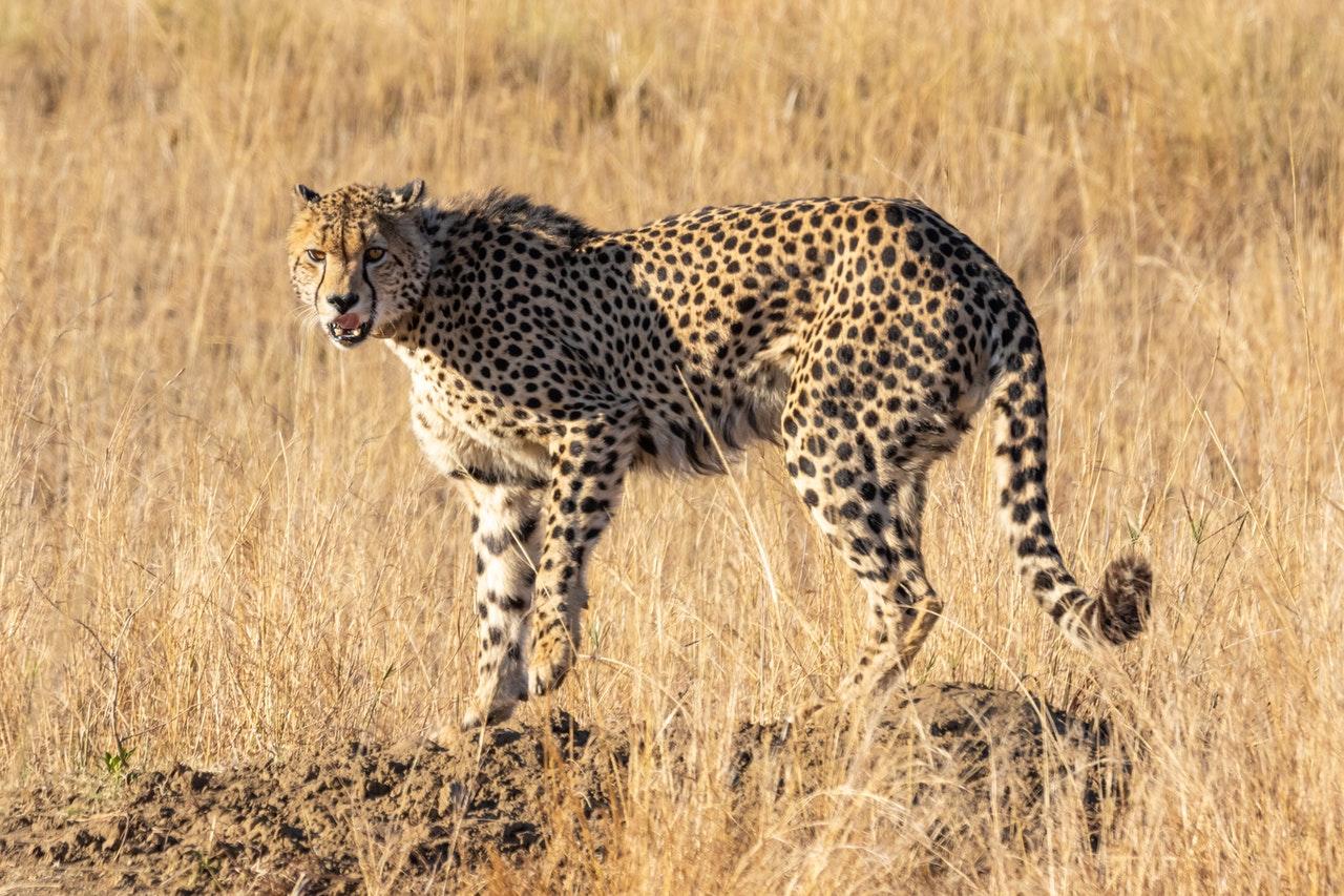 #The Best Safari in Tanzania
