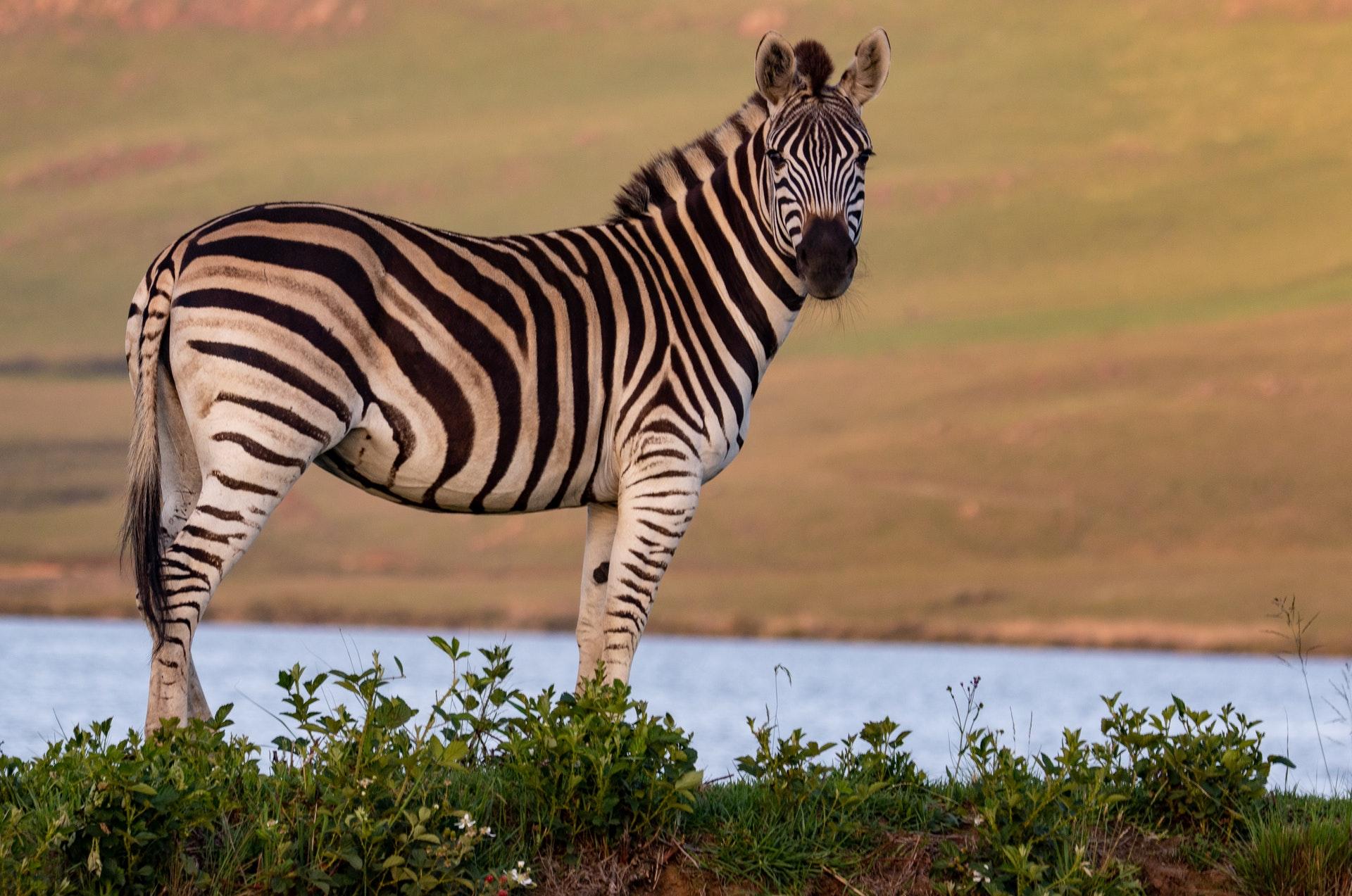 #Budget Tanzania Safari
