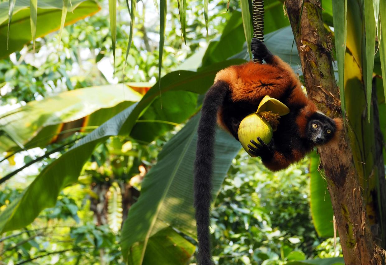 Eastern Madagascar Tours 8