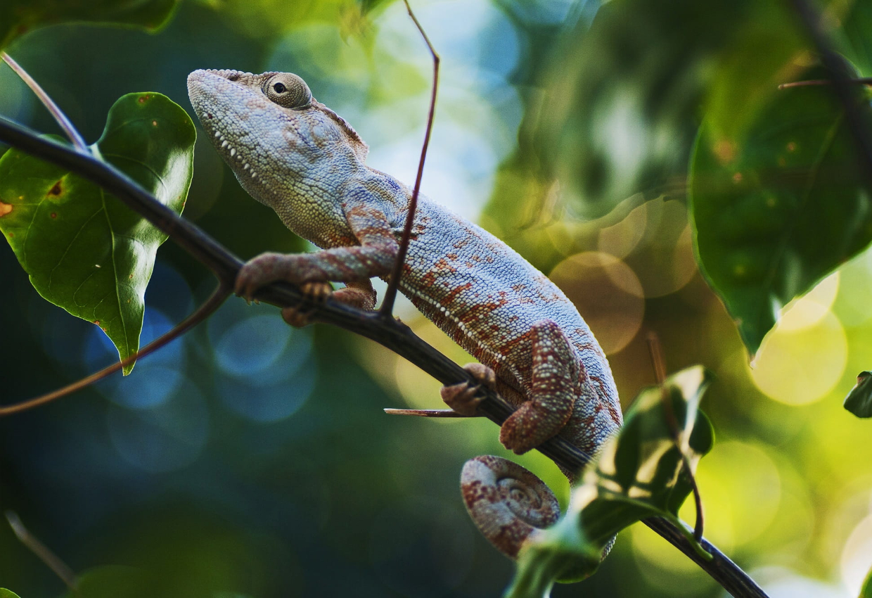 Eastern Madagascar Tours 7