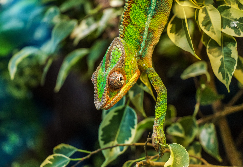 Madagascar Classic Tour 9