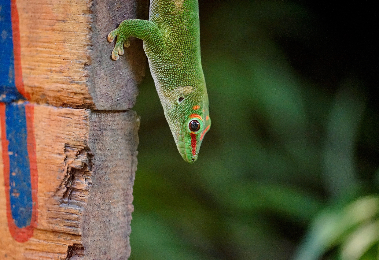 Wonders of South Madagascar Tour 9
