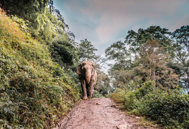 Pure Sri Lanka 7