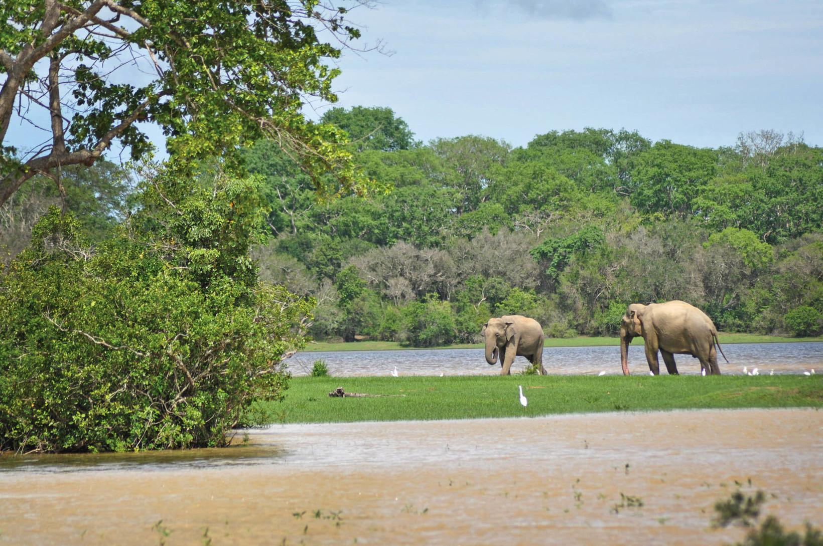 Lahugala National Park - ceylon travel dream