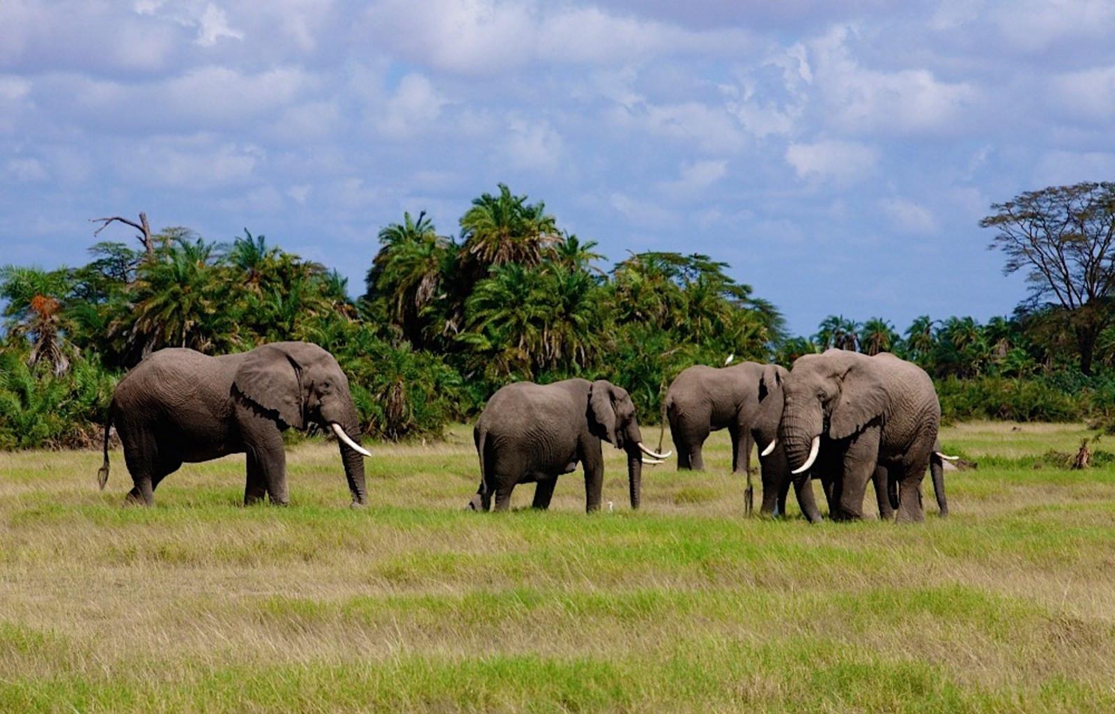 10 Days Best of Kenya Big Five Private Wildlife Safari 2