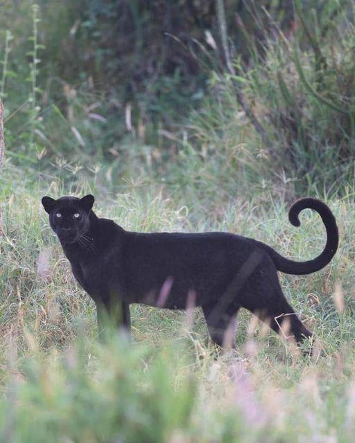 10 Days Best of Kenya Big Five Private Wildlife Safari 3