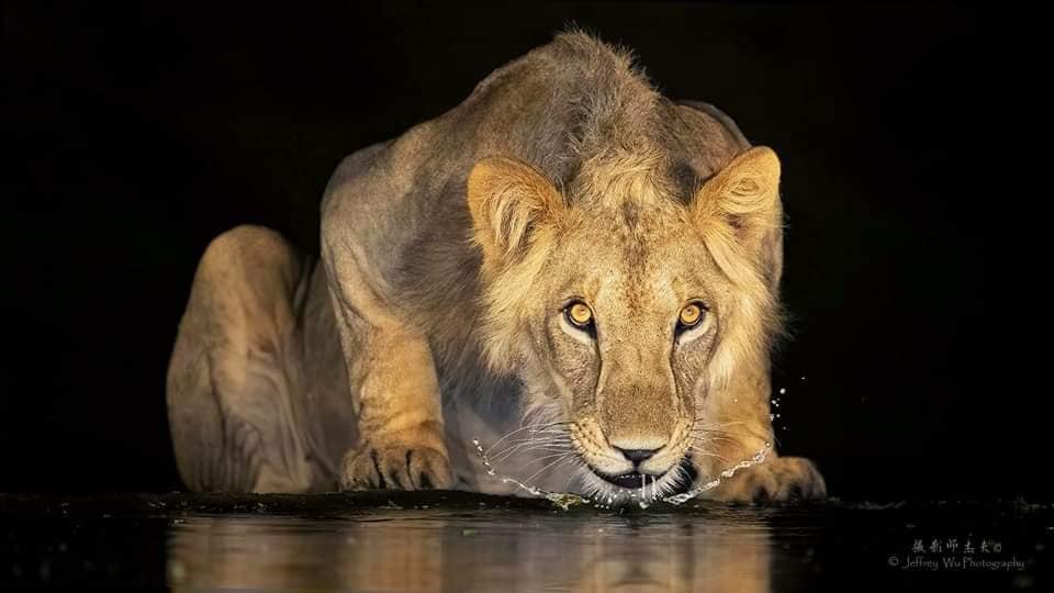 10 Days Best of Kenya Big Five Private Wildlife Safari 5