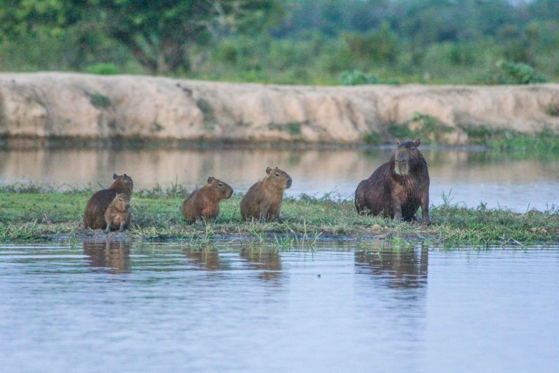 Safari in Cattle Plains - Los Llanos 10