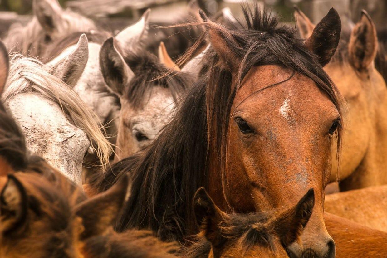 Safari in Cattle Plains - Los Llanos 5
