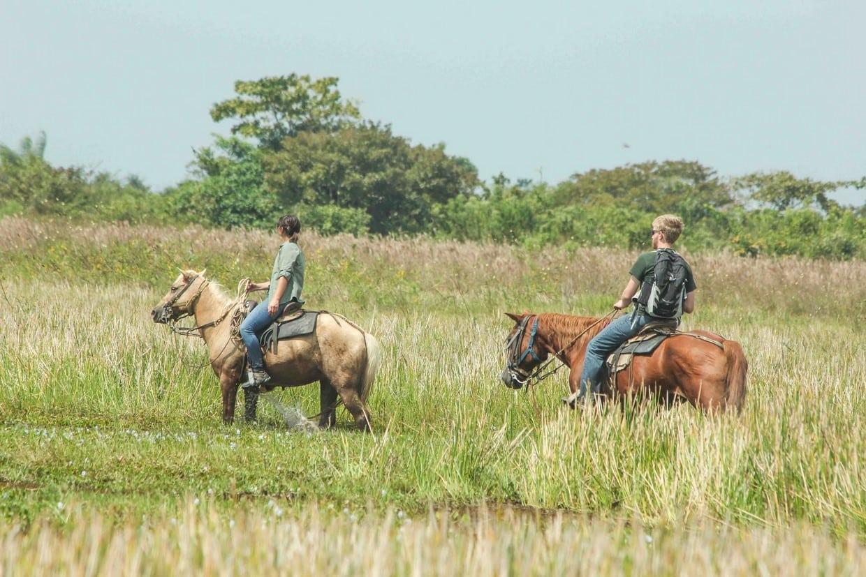 Safari in Cattle Plains - Los Llanos 9