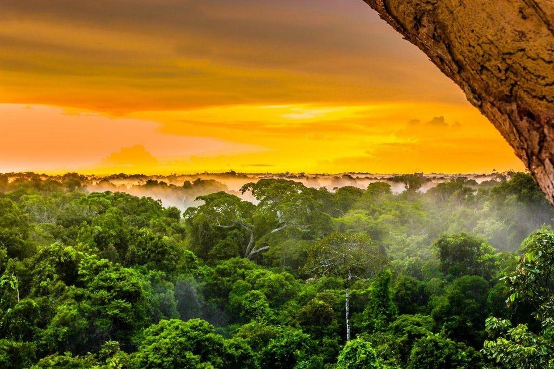 Amazon Rainforest Discovery Tour 2