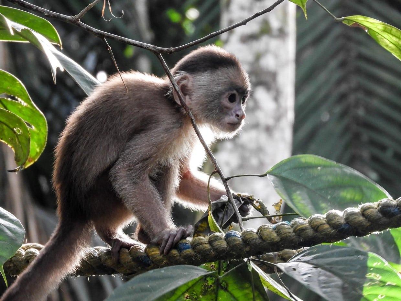 Amazon Rainforest Discovery Tour 4