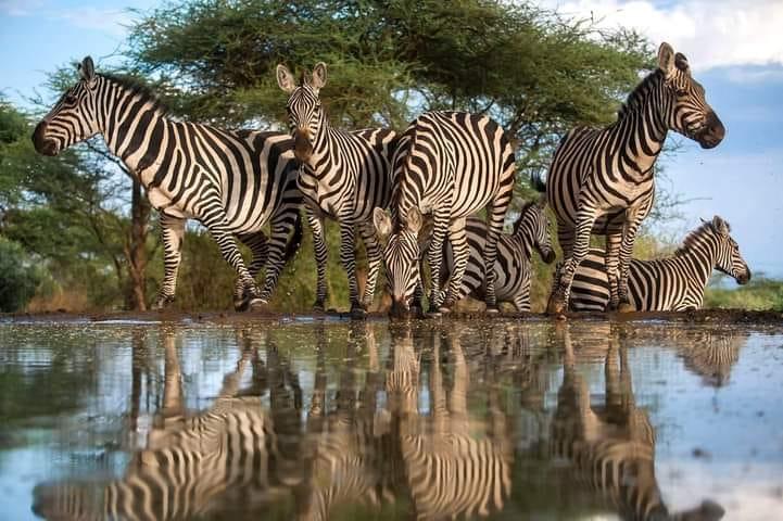 5 Days Aberdare, Lake Nakuru and Masai Mara Safari 3