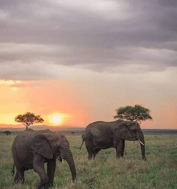 5 Days Aberdare, Lake Nakuru and Masai Mara Safari 4