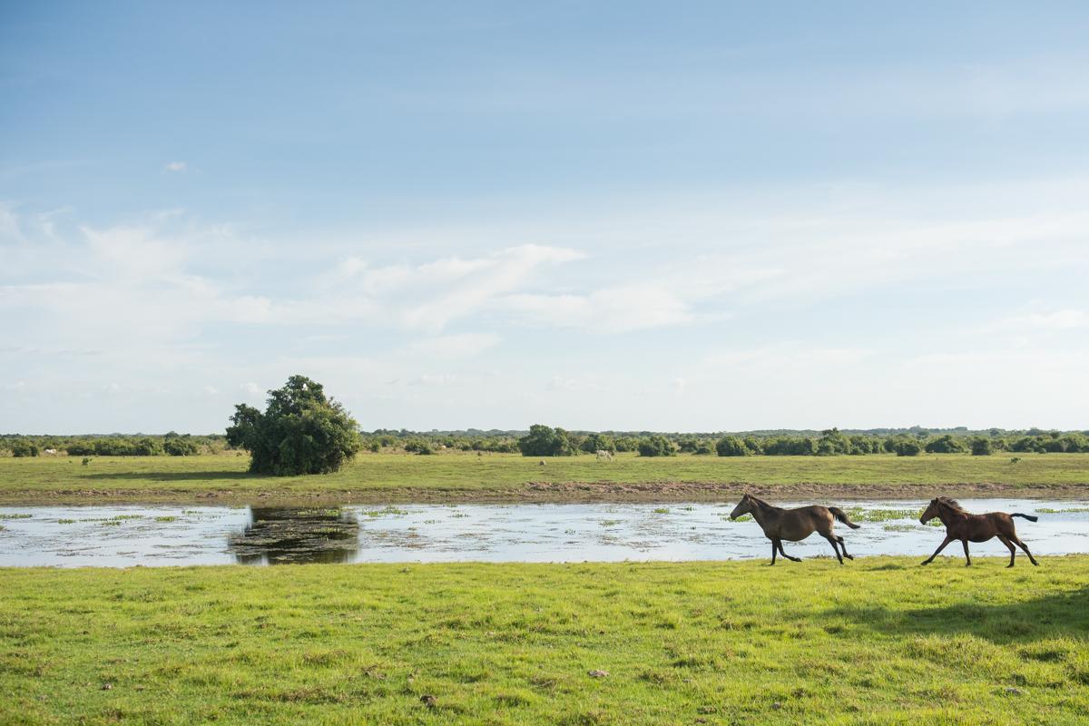Safari in Cattle Plains - Los Llanos 1