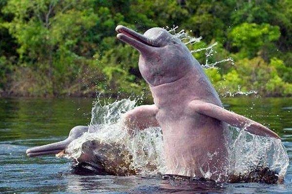 Discover the Amazon Rainforest 1